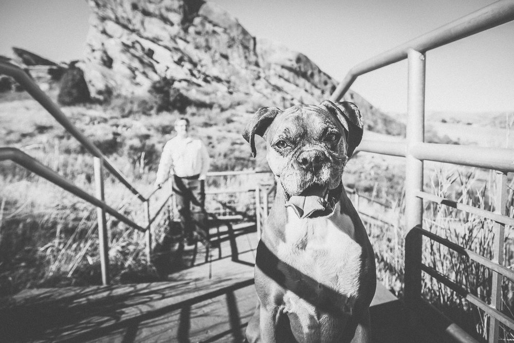 Sweet Ruby led the pack at Red Rocks Trail in Denver, Colorado. This purebred boxer was every bit her breed. She was shy at first, but eventually she allowed me to take her portrait. Turns out, she's a total ham!
