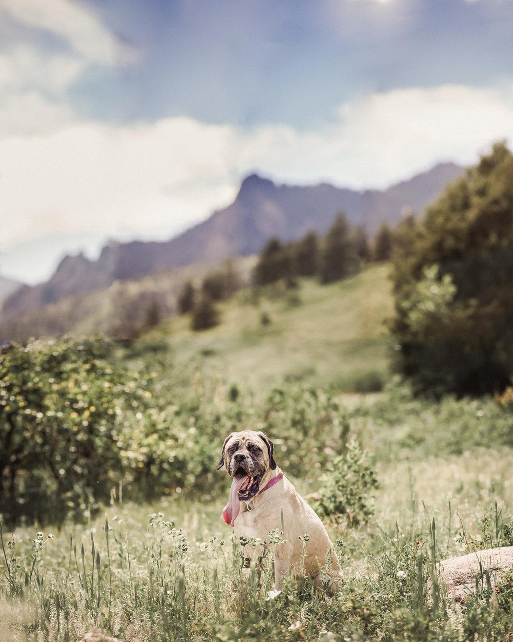 Wes-Ryan-Dog-Photography-IMG_4870-Pano-RT.jpg