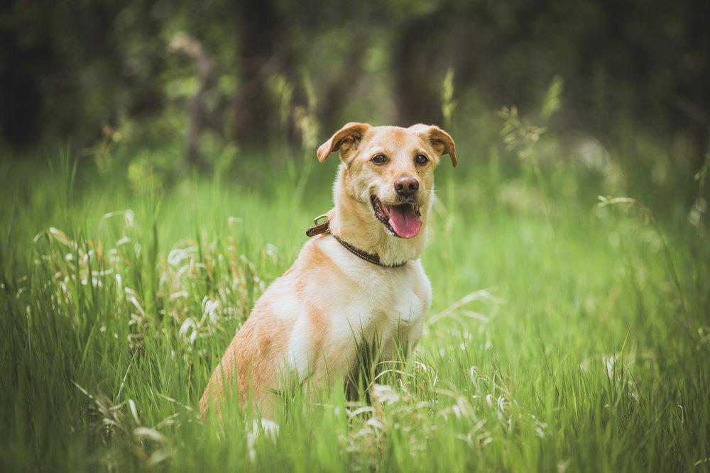 Wes-Ryan-Dog-Photography-IMG_5241.jpg