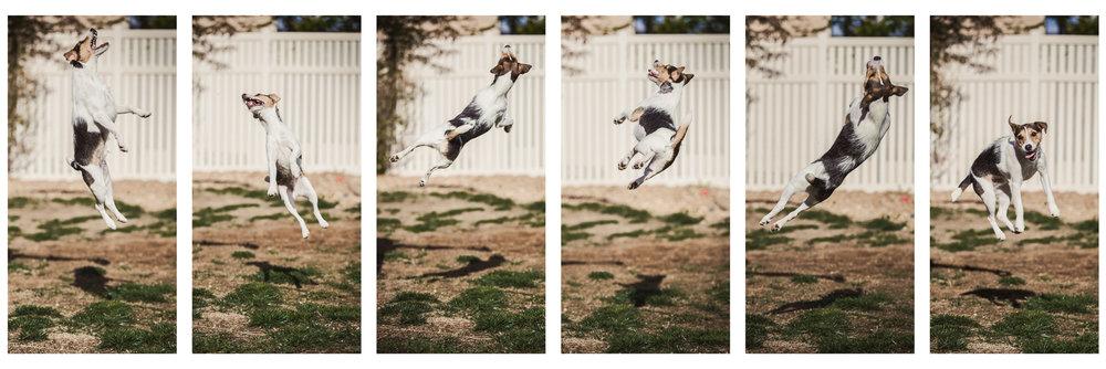 Wes-Ryan-Dog-Photography-johnnyjumpmockup.jpg