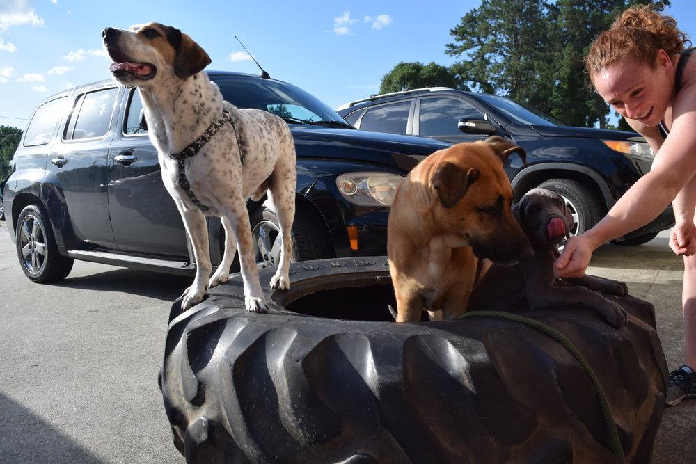 Puppy Tire Flips