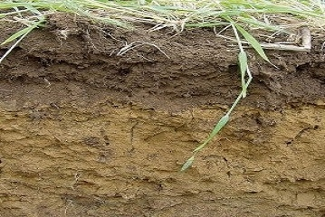 Applied Bio-minerals - ABM - MQE x4.jpg