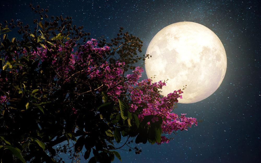 moon-FLOWER0517.jpg