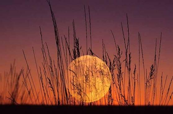full corn moon.jpg