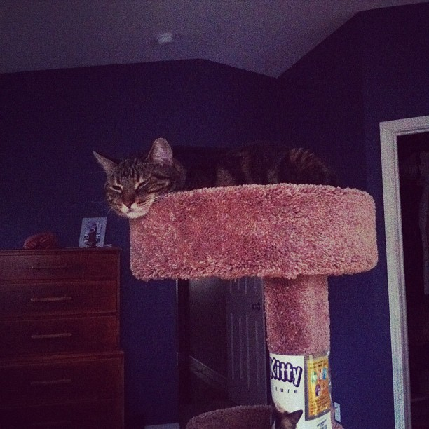 The cat has a new favorite spot. (Taken with  instagram )