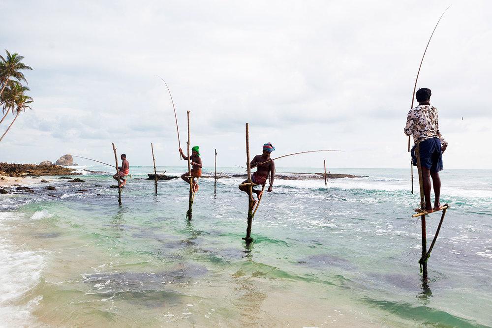 Stilt fishermen /  Galle / Sri Lanka