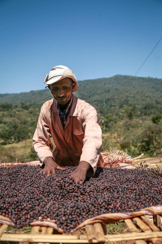 Ardi coffee drying in cherry in the Sidamo-Guji zone of Ethiopia, Jan 2017,