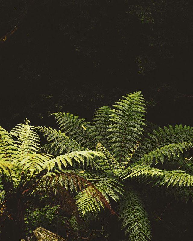 I wish Chicago had ferns year round 😍