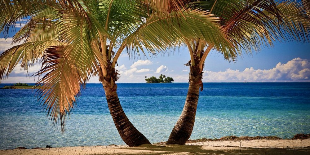 Belize coconut trees.jpg