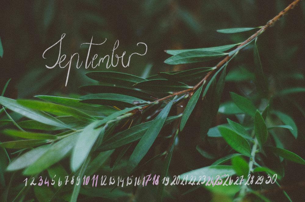 Dorija Apple Parsley_September2016