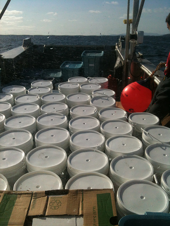 Delivering 2.5 tonnes of rat trap bait for an isolated rat eradication project.