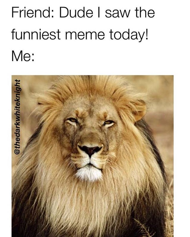 This is the king of cats... @thedarkwhitenight is the KING OF MEMES 😎😎follow @darkwhitenight ➡️@darkwhitenight ➡️@darkwhitenight ➡️@darkwhitenight . . . . . #reallytho #relatablepost #funnybuttrue #ilovemycats #catsrule #catslife #catlove #catsrock #catsruleeverythingaroundme #catsareawesome #makesmesmile #catloversclub #catmeme #funnycats #kittykat #happycatclub #kittylife #kittylove #pawstruck #purrmojiapp