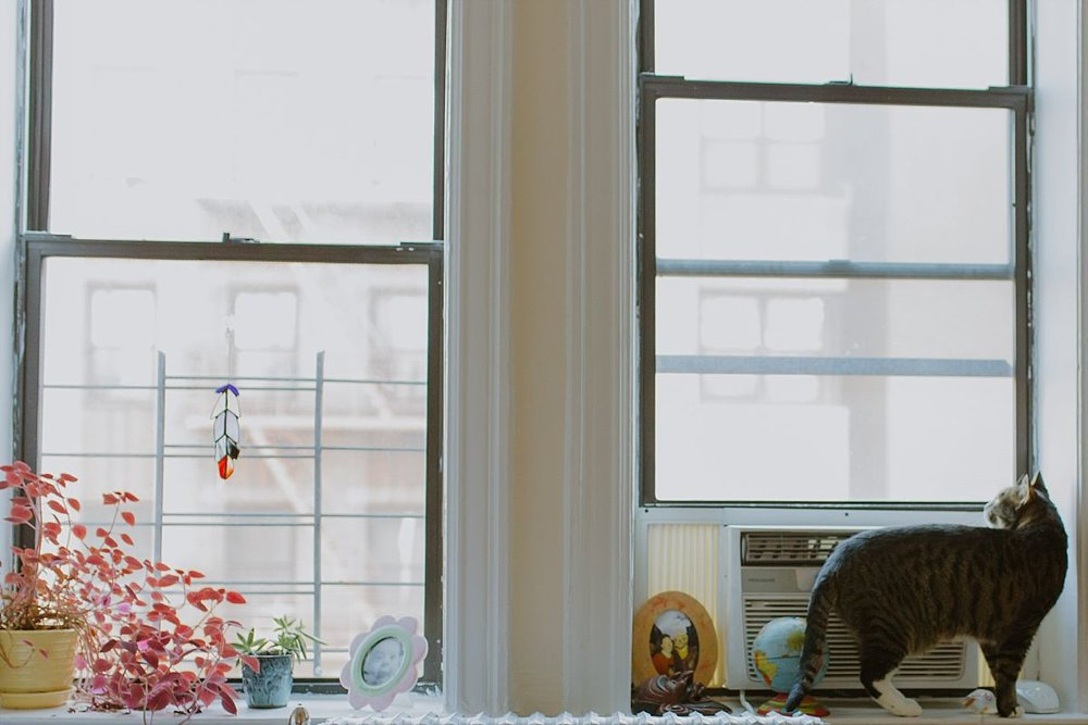 nyc family and newborn photographer cat sitting on windowsill for in home newborn session