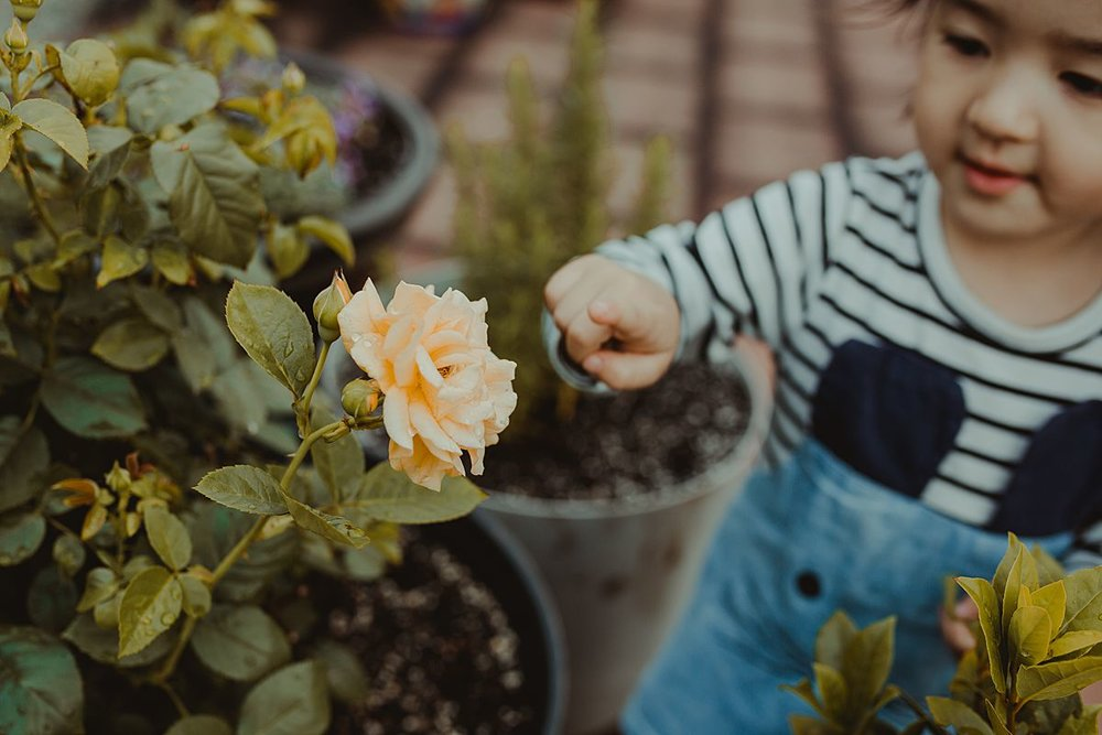 daughter is curious about yellow flower and leans out to touch flower. capturing your child's curiosity and fleeting family moments in nyc. photo by krystil mcdowall photography