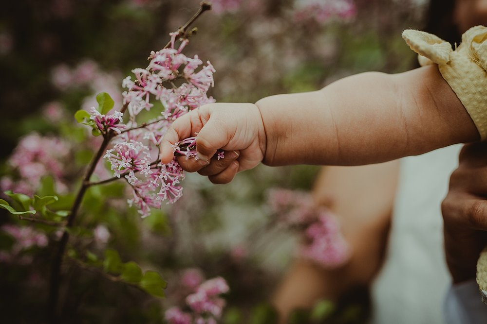 Orange County family photographer. Photo of baby's hand stretching out to grab spring flowers during outdoor family photo session with Krystil McDowall Photography