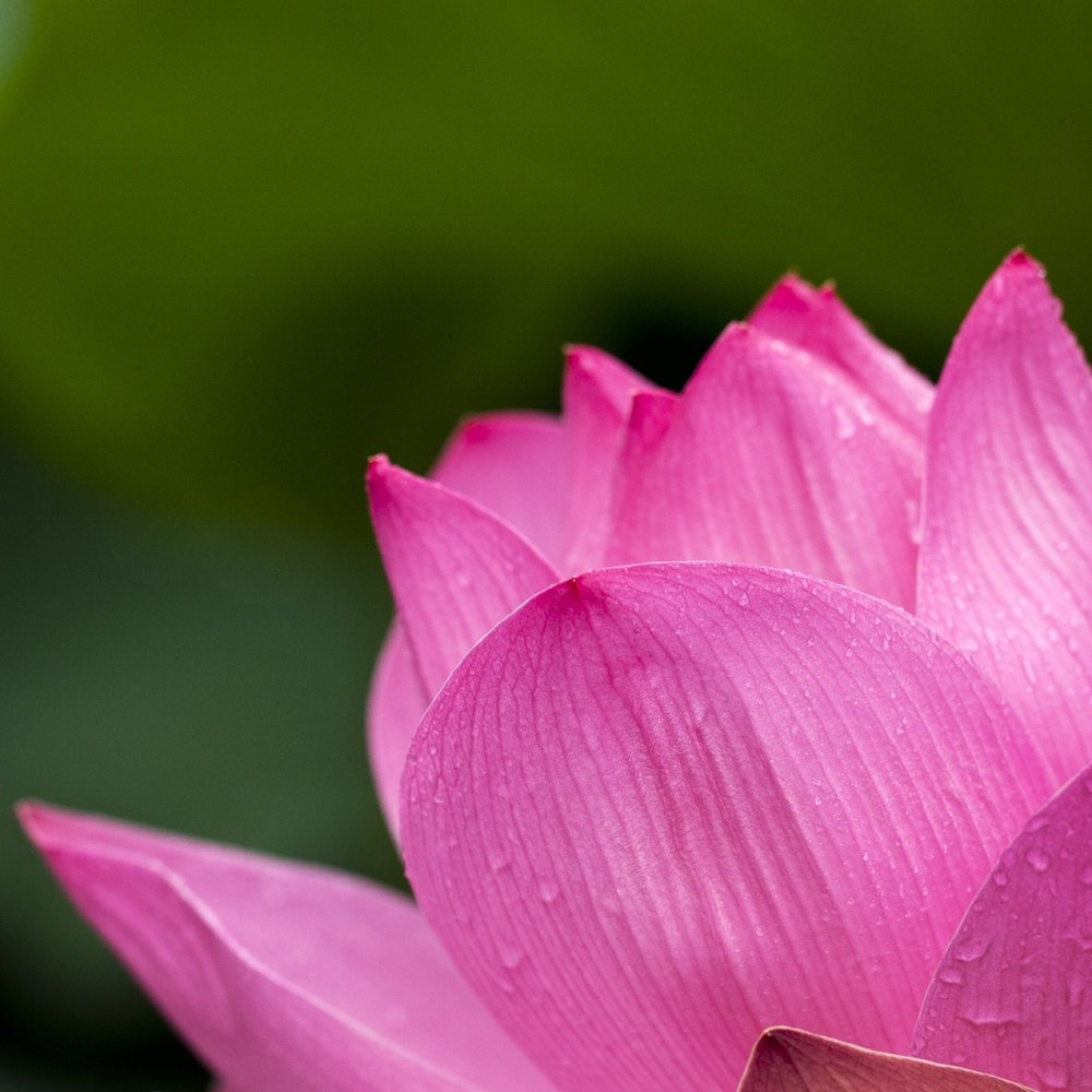 About Lotus Blossom Healing Arts