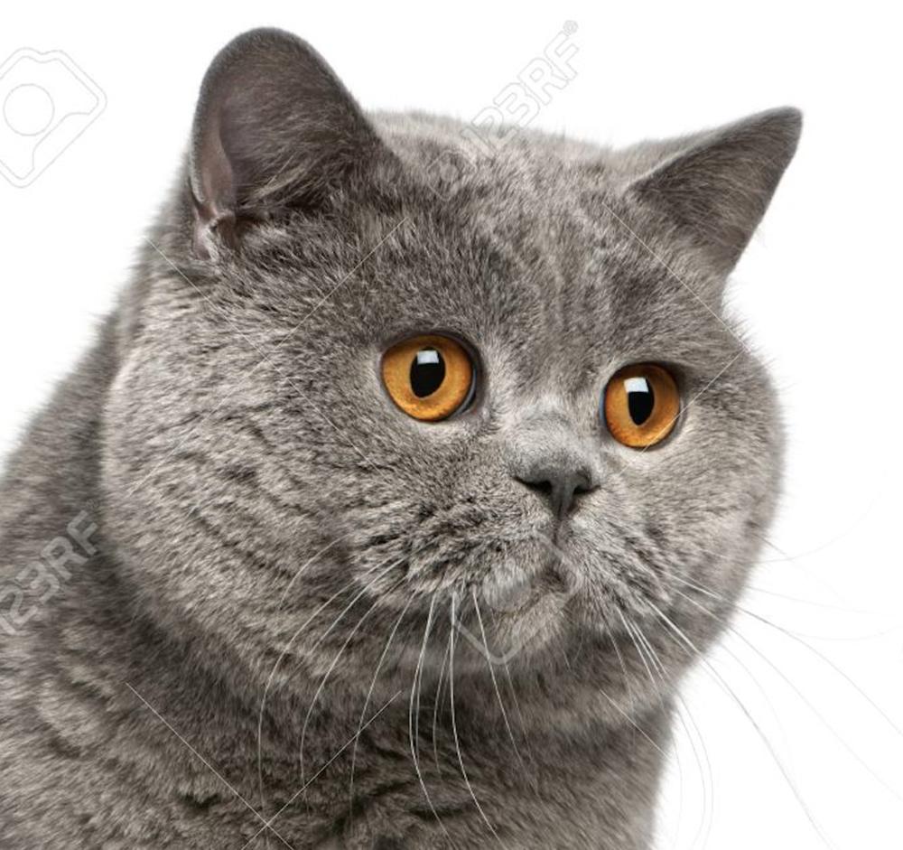cat_slack_bust.png