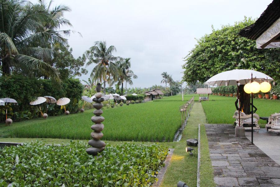 Mr-W_Sardine-Bali_8.jpg