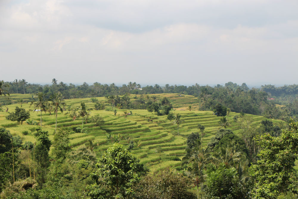 Mr-W_Bali-Rice-Terraces_15.jpg