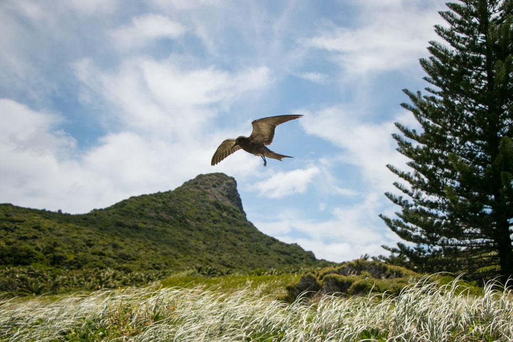 Mister Weekender_Lord Howe Island 11
