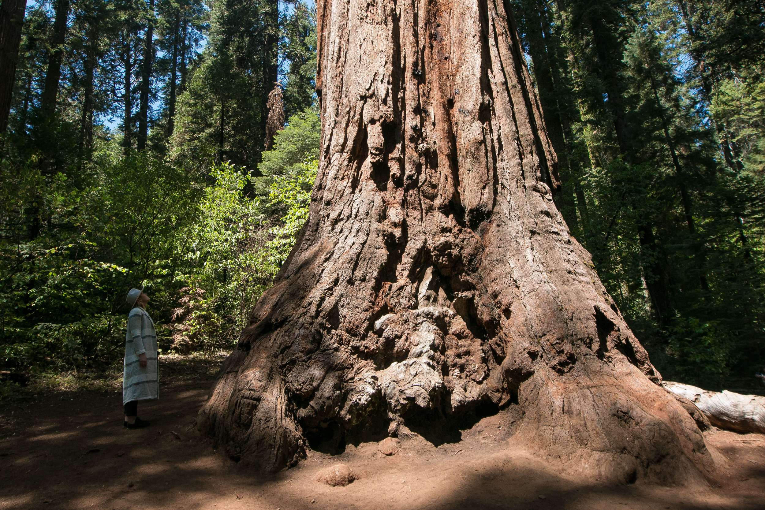 Nelder Grove of Giant Sequoias Mister Weekender Jaharn Giles