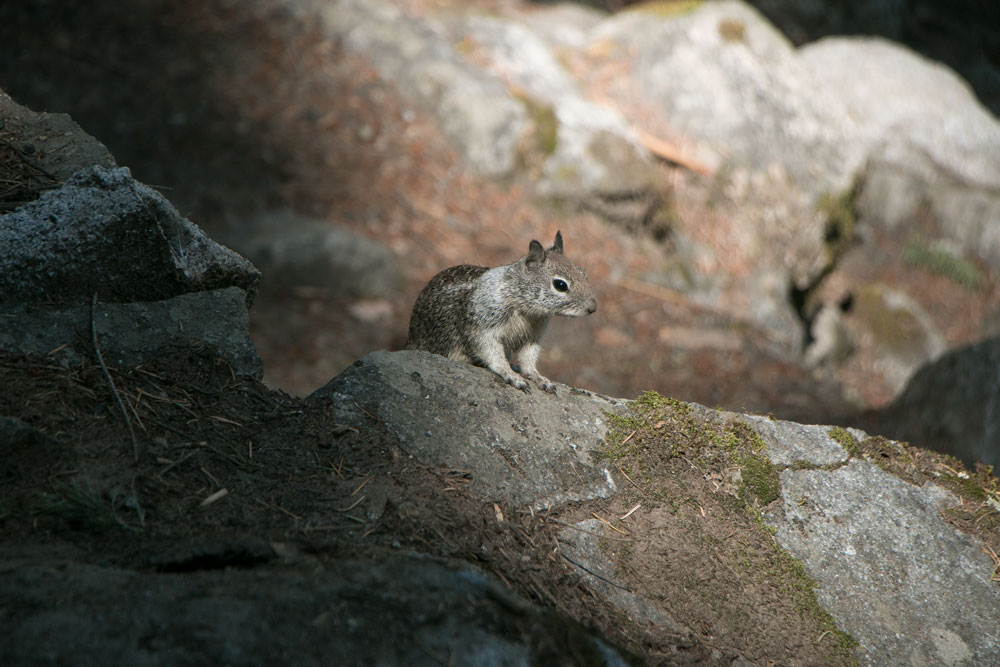 Vernal Falls Hike Wildlife