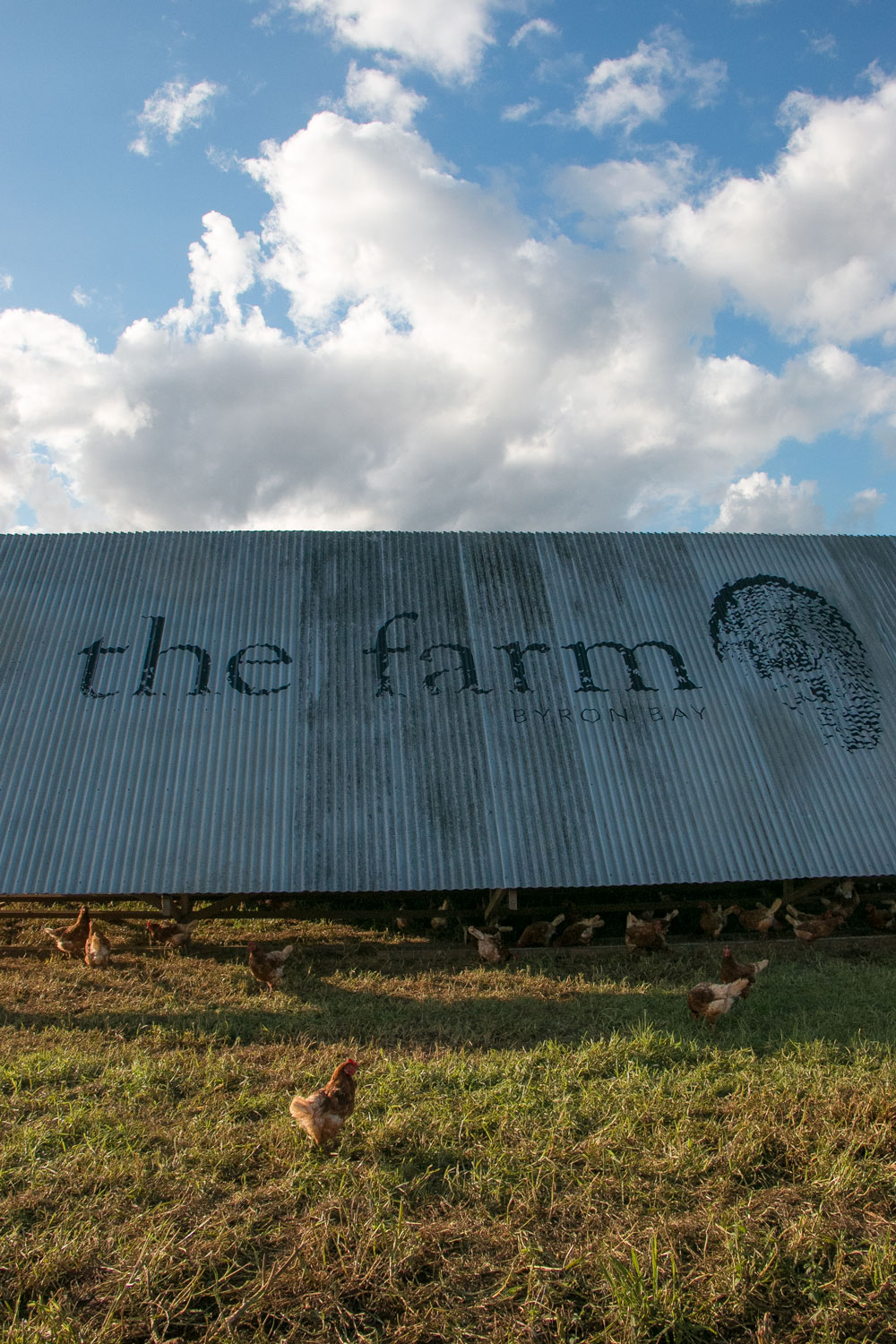 The-Farm-Chickens-Byron-Bay-Travel-Guide