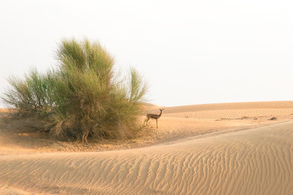 arabian-desert-adventure_A.jpg