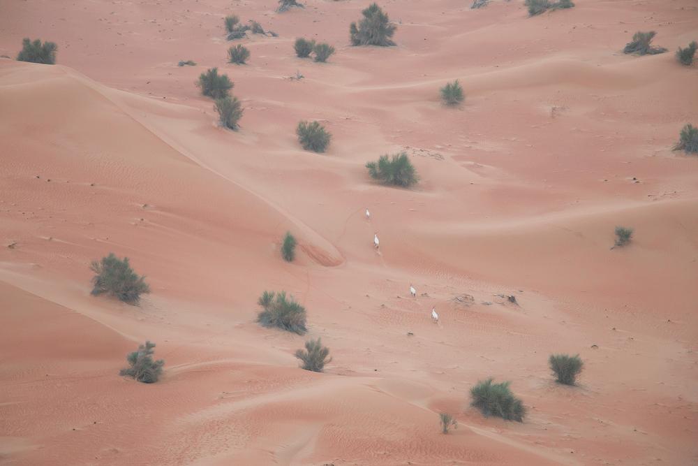 hot-air-balloon-desert-dubai