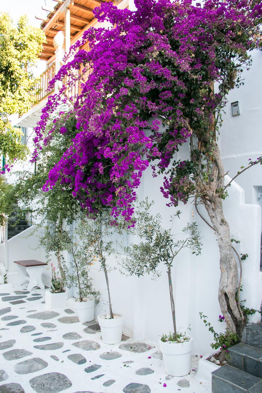 Mister-Weekender-Beautiful-Mykonos