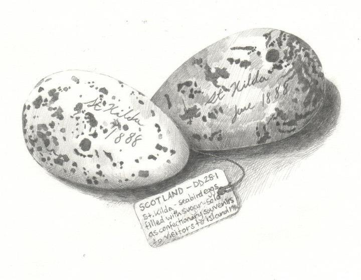 'Sugar Eggs'
