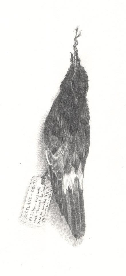 'Storm Petrel Lamp'