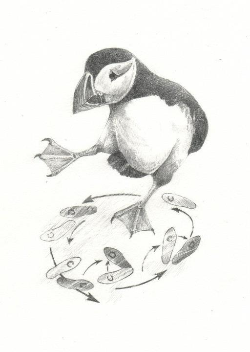 'Lachlan's Puffin'