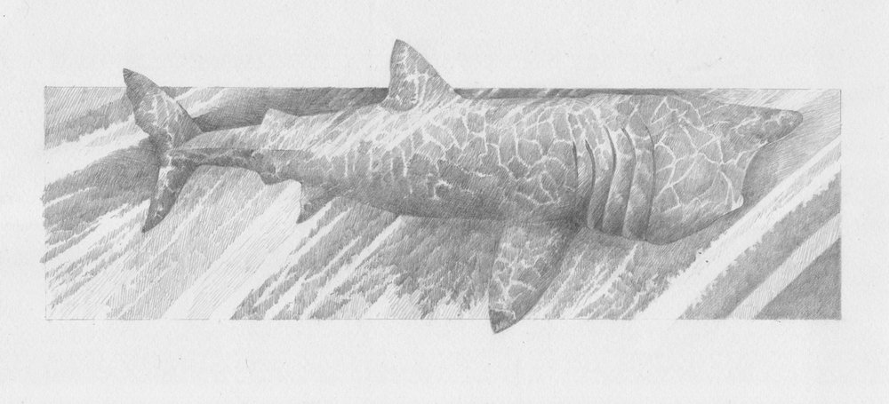 'Basking Shark' from  Beasties  collaboration with poet  Isobel Dixon