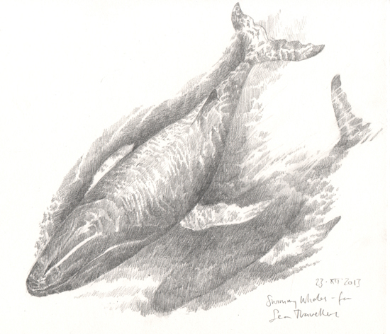'Whales study' from  Beasties  collaboration with poet  Isobel Dixon