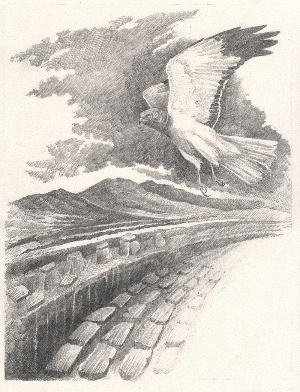 Moine Dhubh -  Caorann - Black Peat