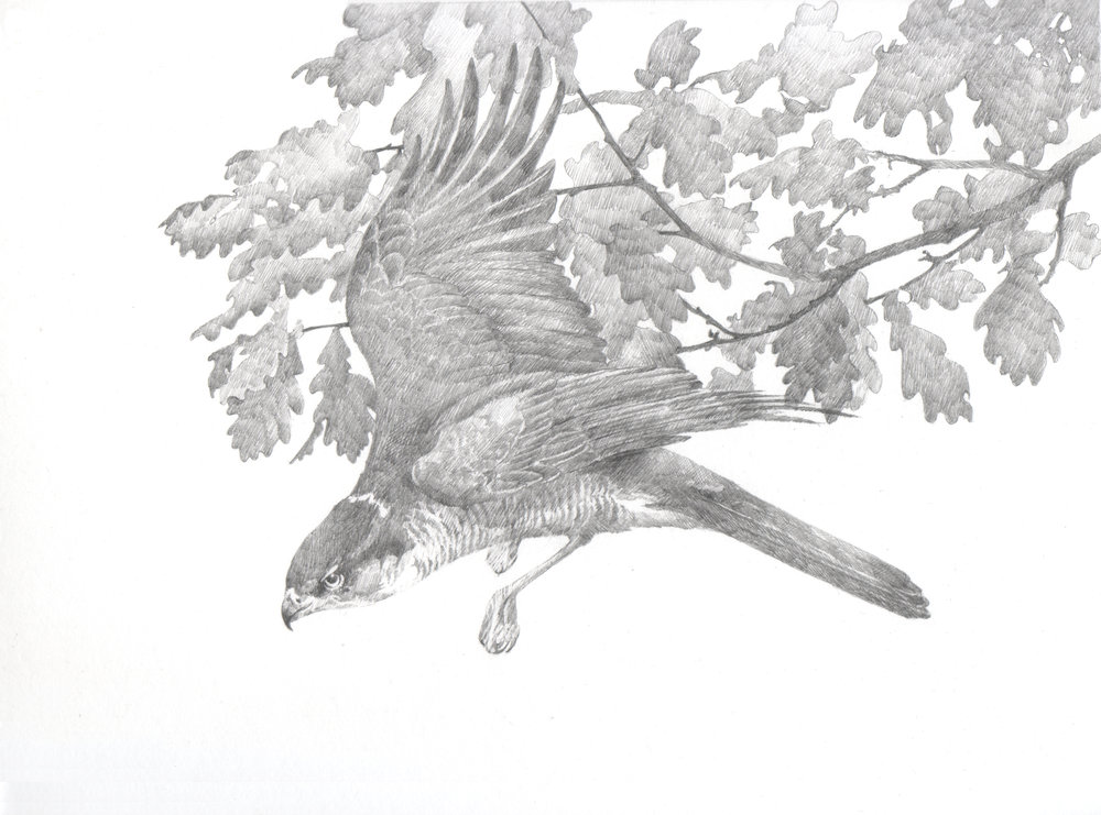 'Musket'  - study for 'Hawk' collaboration with Martin Bradley