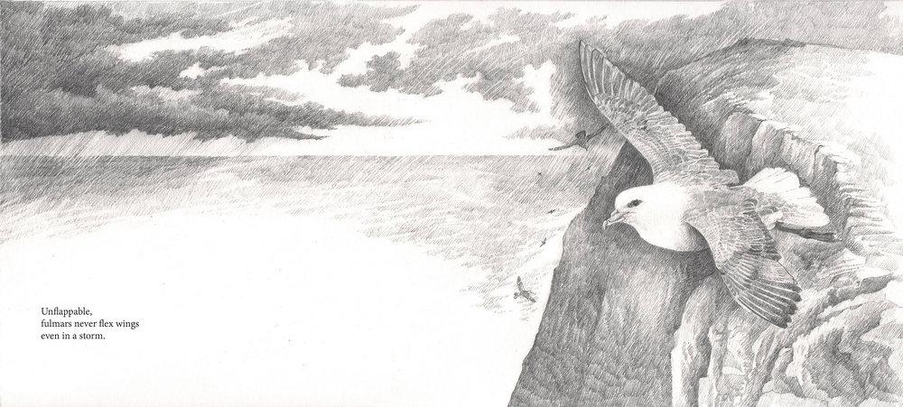 Fulmar page 1.jpg