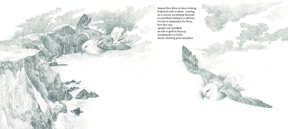 fulmar 2 book page.jpg