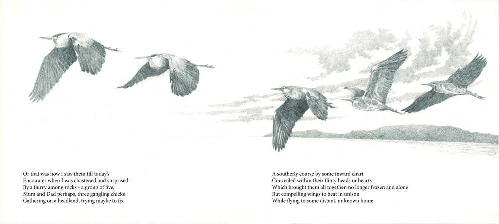 heron book image 2.jpg