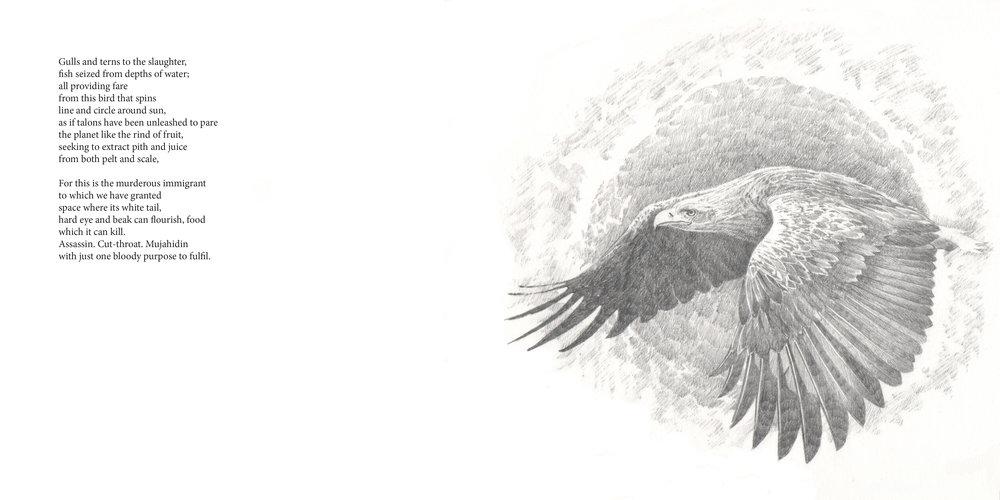 Sea-Eagle
