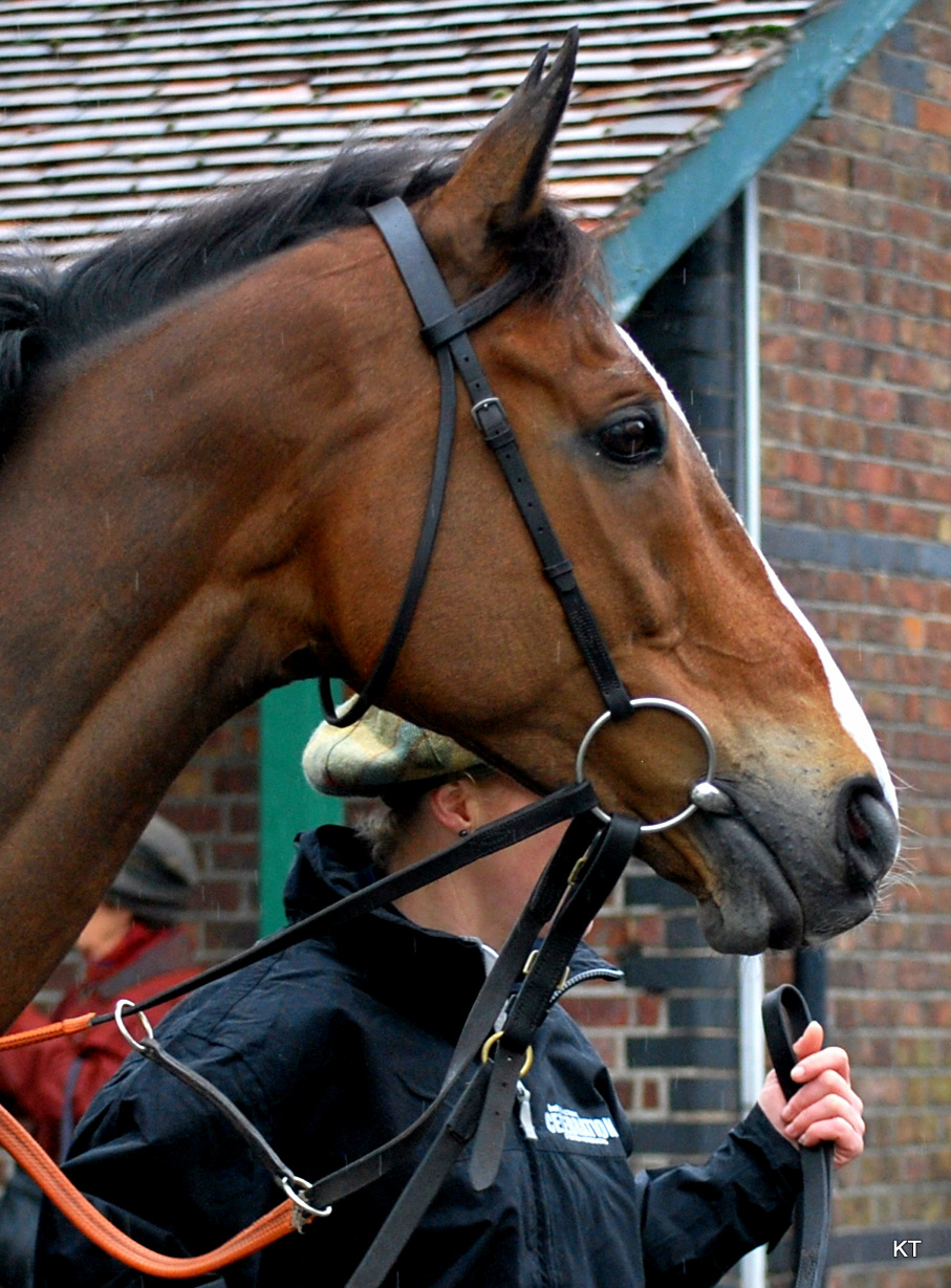 Photos b  y Carine06 from UK of Kauto Star via Wikimedia Commons