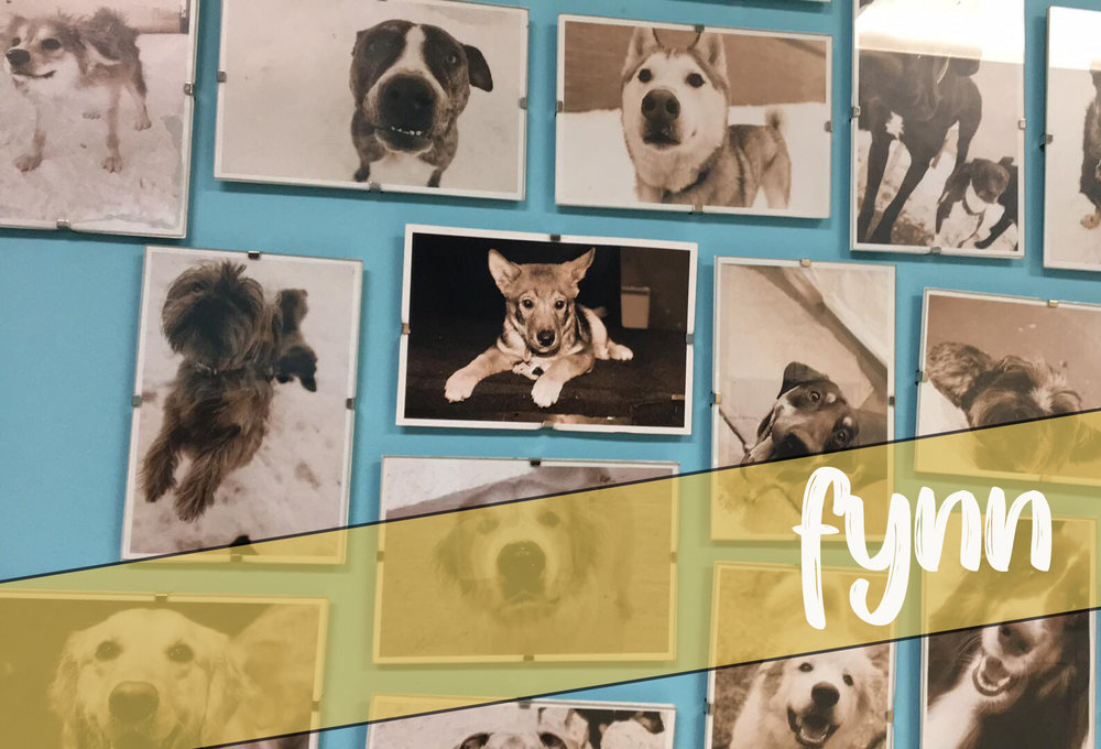 Fynn as a puppy - on our wall of OG clients