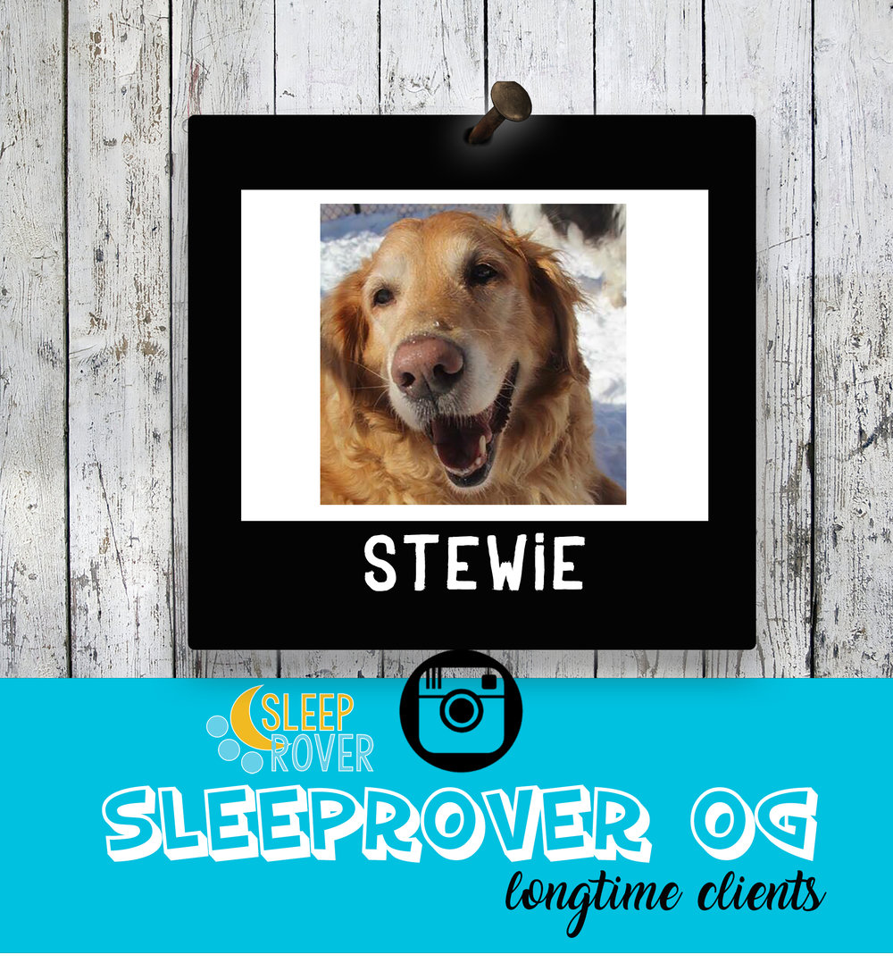 "Mr.Stewie! Our main man! This is Stewie, he is our doggo of the week!  He has been with us for 6 years and comes for a run around almost every day of the week!! We love his excited attitude as he runs in the door bright and early with his dad and he knows exactly where he's going! Thank you Stewie for being the goofball you are and always loving life here, WE LOVE YOU!   Now a word from Stew!    ""Oh boy! I don't know where to start, but my most favorite thing is the bum scratches I get! I like to sing and ""woo"" while I get them! I LOVE rolling around in the snow and trying to bite at it while looking adorable! I have been known to shoplift some toys from time to time but my dad always catches me, darn it! My manners are always on par and I always bark a goodbye to the ladies when I leave!""  ~ashlea"