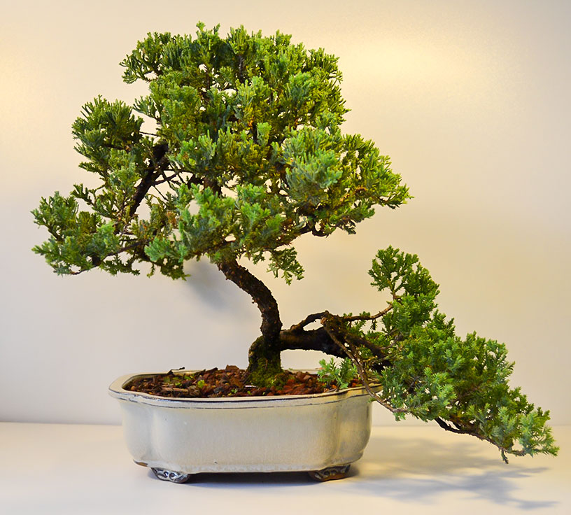 gallery_bonsai3.jpg