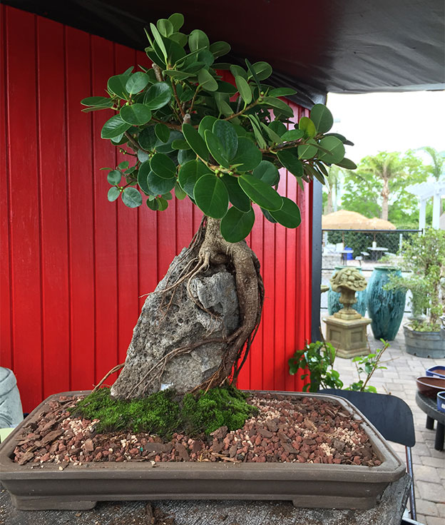 gallery_bonsai10.jpg