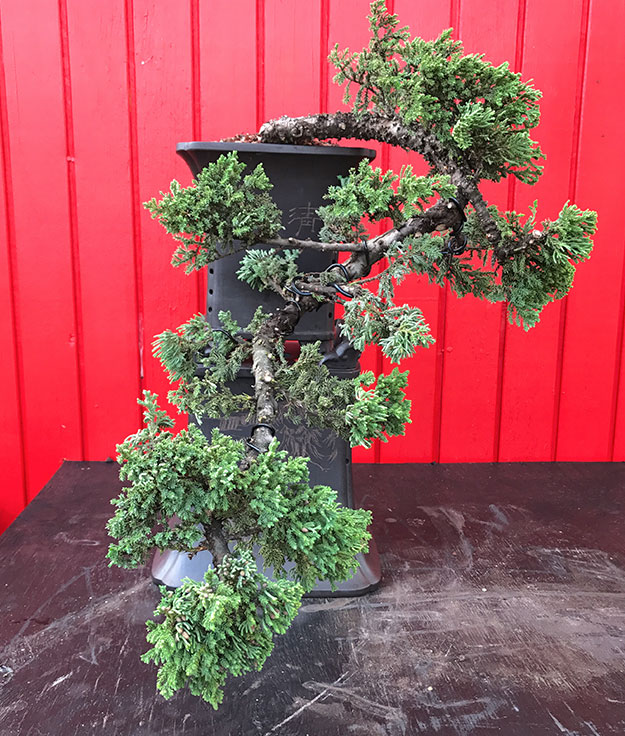 gallery_bonsai17.jpg