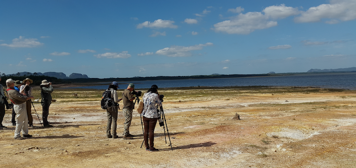 Leading a tour group in cuba for Birdscaribbean
