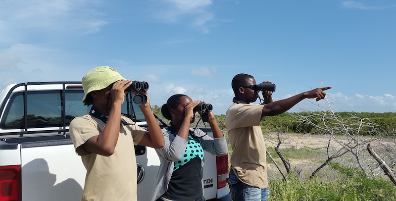 C-CAM interns monitoring birds for a neotropical migratory bird Act project in Portland bight
