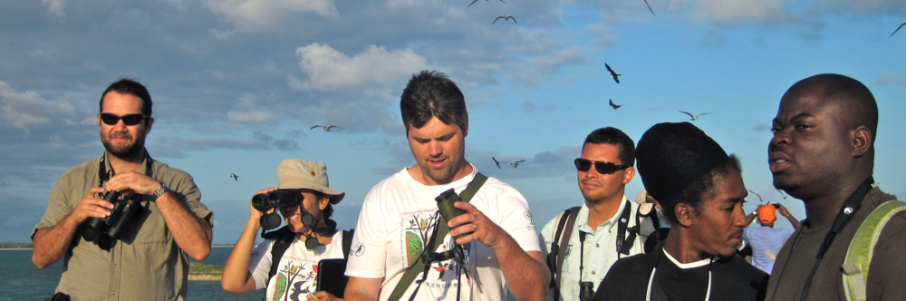 Monitoring seabirds with birdscaribbean, san salvador, bahamas